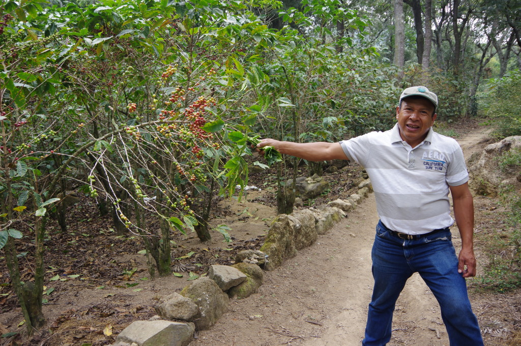 My guide, also a part-time coffee farmer
